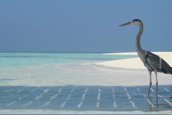 smartline Eriyadu: heron under the jetty