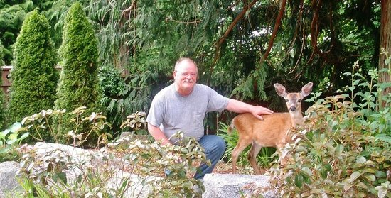 InnSpire Resort & Spa: Friendly deer