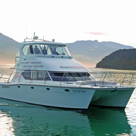 Akaroa Dolphins: Our luxury boat