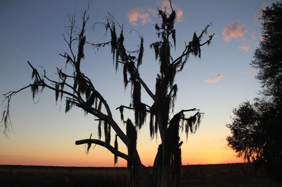 Paynes Prairie: Captioning the sunset over the praire.