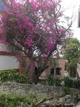 Tamaraw Beach Resort: The Secluded Garden