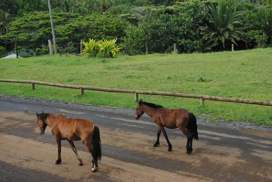 Cabanas Christophe: Horses on the road in front of cabana