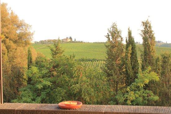 Agriturismo Podere Torricella - Fattoria il Turco:                                     Vineyard views