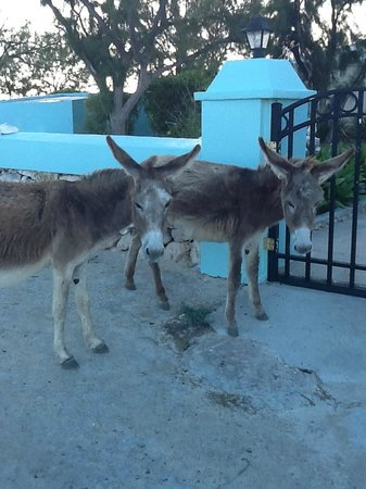 The Villas of Salt Cay : Two locals at the gate