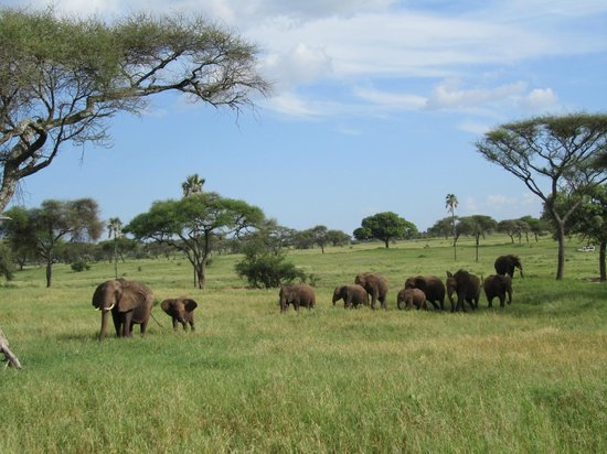 Maramboi Tented Camp: More elephants at Tarangire