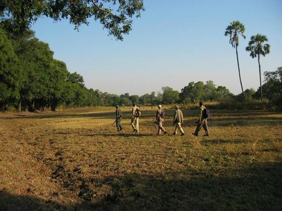Kafunta River Lodge: Walking safari