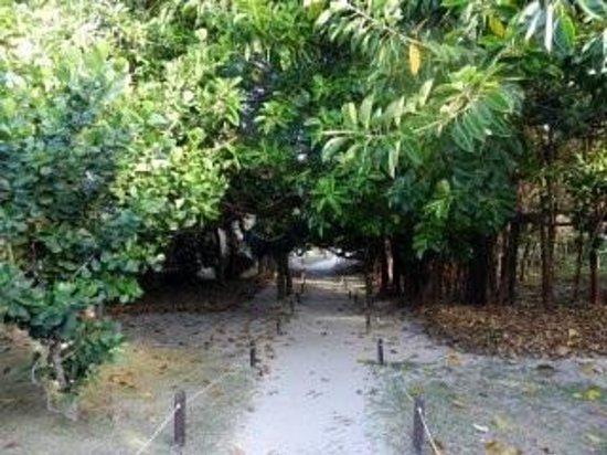 Iberostar Varadero:                   Sentiero che porta alla spiaggia