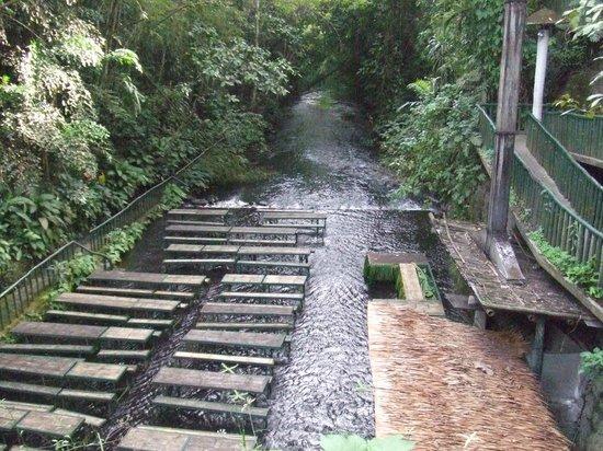 Waterfall Restaurant Picture Of Villa Escudero Tiaong