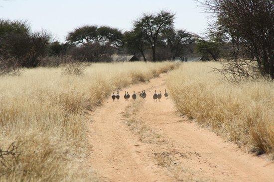 Kuzikus Wildlife Reserve Lodge :                   Das Farm-Gelände