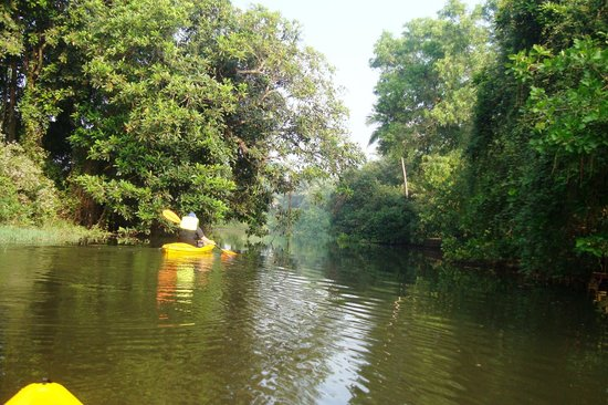 ‪Goa Kayaking - Day Tours‬