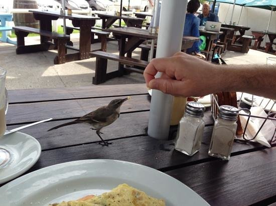 Ons Huisie:                   birds are so tame they will come and eat out of your hand - at least someone w