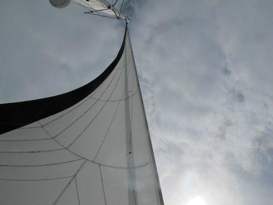 Island Sailing onboard Te Aura - Waiheke Island:                   sail
