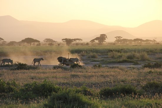 East Africa Adventure Tours and Safaris - Day Tours:                                     hunting for wild boar