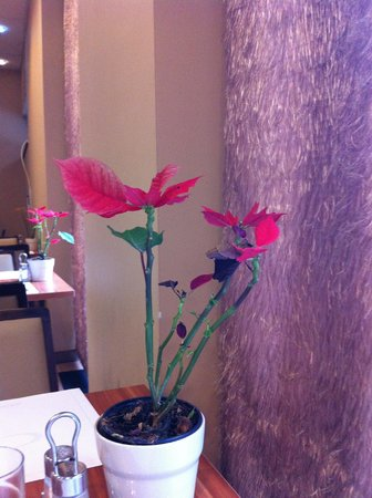 Hotel Regnum Residence:                                     Breakfast flowers and strange hairy curtains