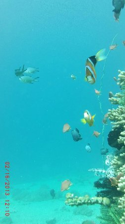 Balai Resort Anilao:                   Diving in Anilao