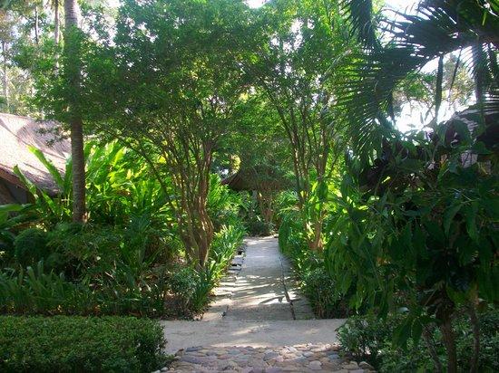 Anda Lanta Resort:                   garden room