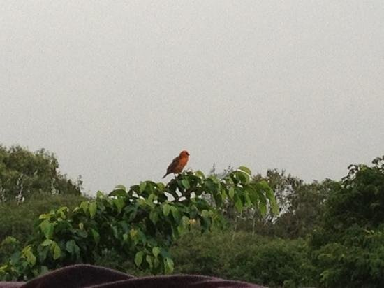Asso Villa:                                     dal balcone della nostra camera...