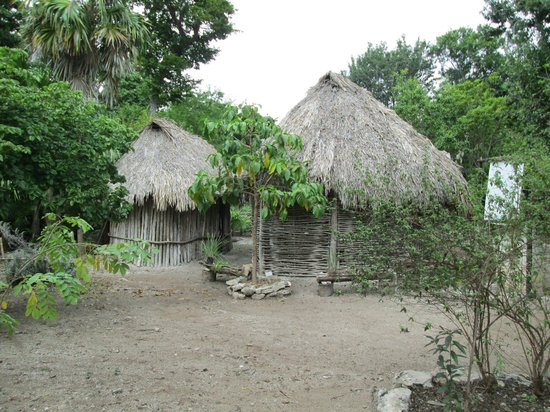 Jardin Botanico Dr. Alfredo Barrera Marin:                                     maison maya