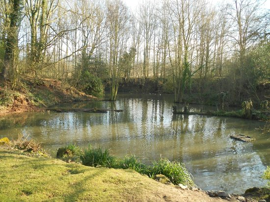 Marl Cottage Bed and Breakfast: Pond in the grounds