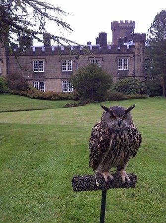 Swinton Park:                   Falconry Experience
