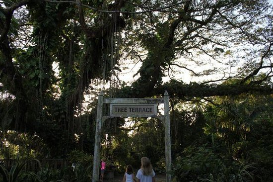Yap Pacific Dive Resort :                   Beautiful Tree Terrace and Gardens