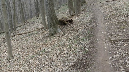 Ralph Stover State Park:                   trail along flat section