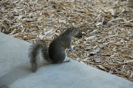 Beachcomber Beach Resort & Hotel:                   Our squirrel friend