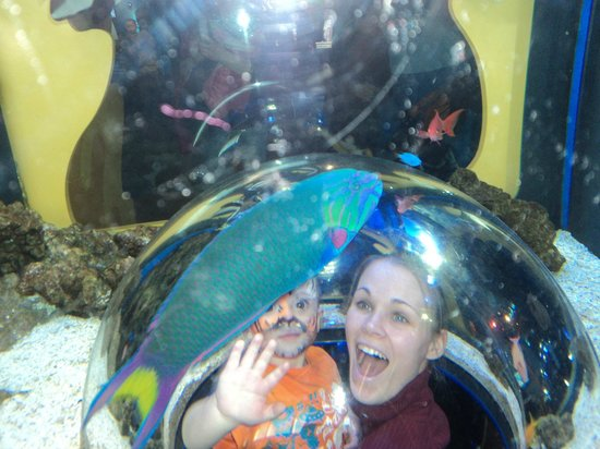 Adventure Aquarium:                   Mommy and Bradley inside the fish tank!