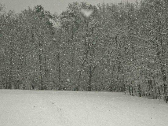 Allegretto B&B:                                     Vista nel bosco retrostante durante una nevicata