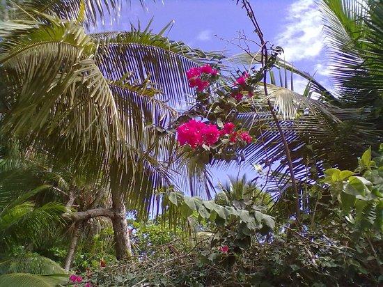 La Dolce Vita:                   magnifica vegetazione intorno alla piscina