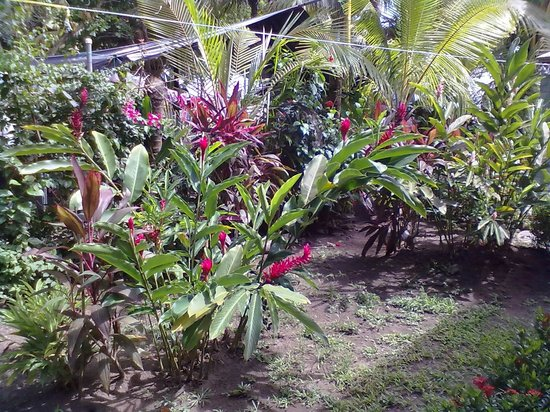 La Dolce Vita:                   piante nel giardino dell'hotel