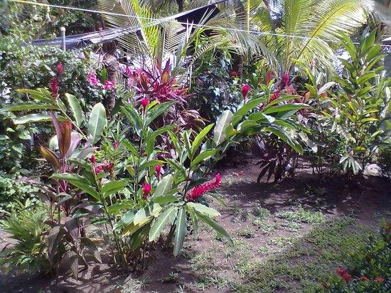 هوتل لا دولسي فيتا:                   piante nel giardino dell'hotel                 