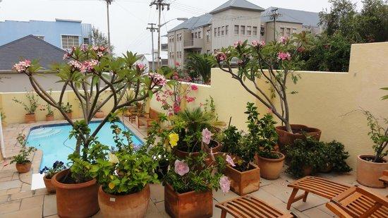 Loloho Lodge:                   Loloho blommor vid pool