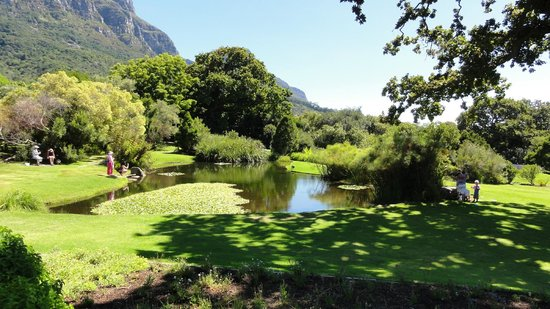 Newlands, Sydafrika:                   Kirstenbosch National Botanical Garden
