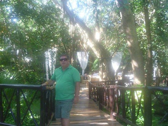 The Reef Playacar:                   En una de las pasarelas del hotel