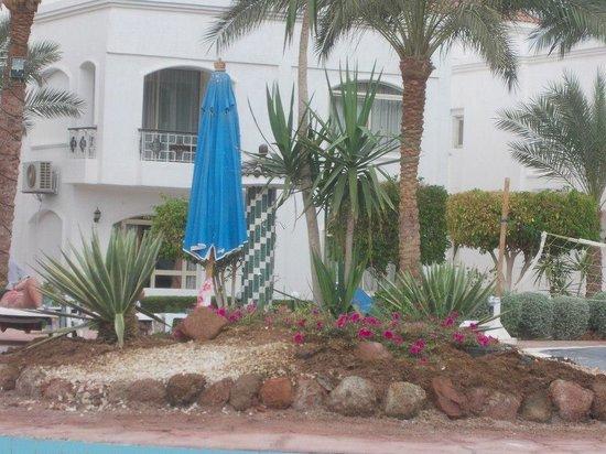 Viva Sharm Hotel:                   Pool island