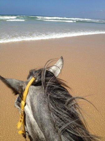 Papiesfontein Beach Horse Rides :                   View from the beach