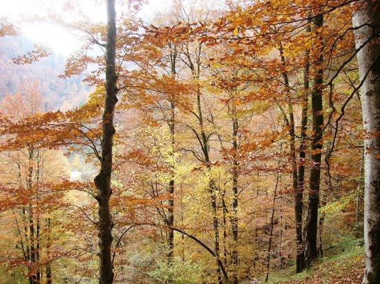 Reichraming, Austria:                   am Buchensteig im Herbst 2011