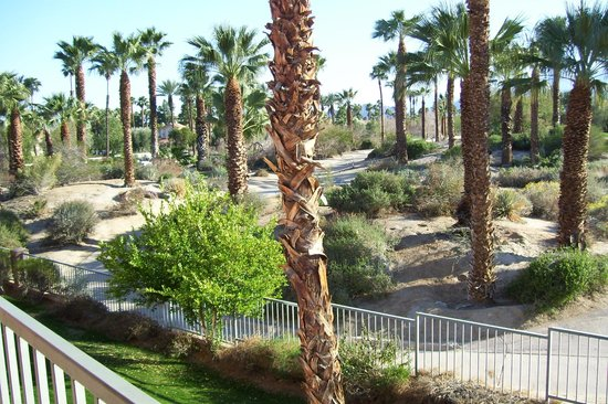 Residence Inn Palm Desert :                   View from our balcony