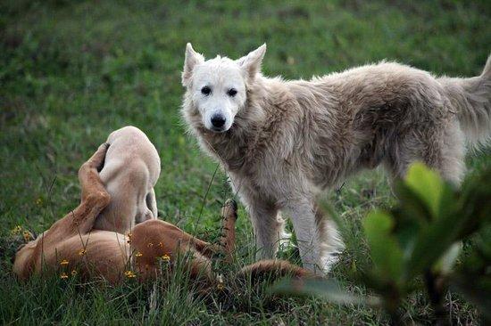 Finca Lindos Ojos:                   Friendly family dogs