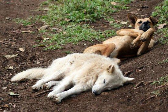 Finca Lindos Ojos:                   Lounging dogs