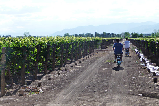 Eco Bikes Wine Tours