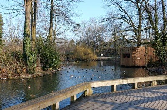 Tierpark Lange Erlen: Der Teich
