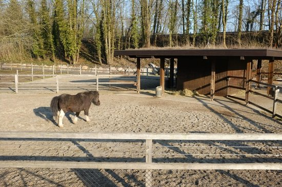 Tierpark Lange Erlen: Esel