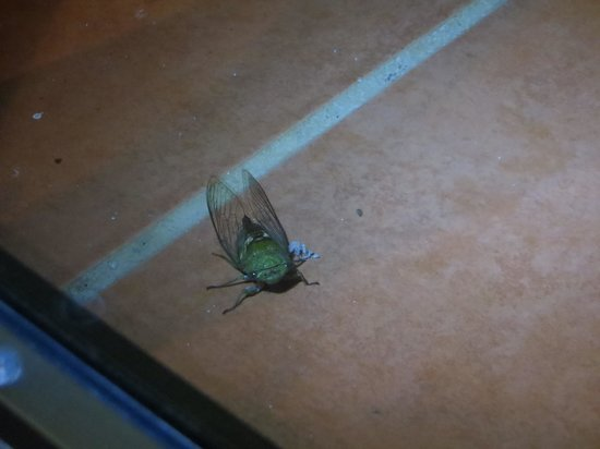 Villas Rio Mar:                                     This bug had serious attitude!