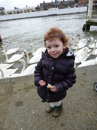 Driver Guide Tours:                   Feeding the swans at Eton
