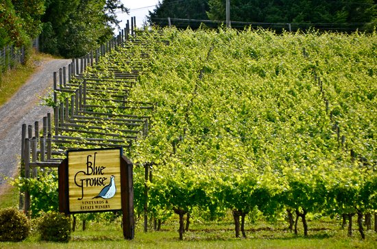 Blue Grouse Estate Winery and Vineyard: getlstd_property_photo