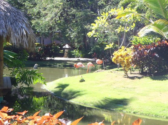 Natura Park Beach - EcoResort & Spa: Flamingos