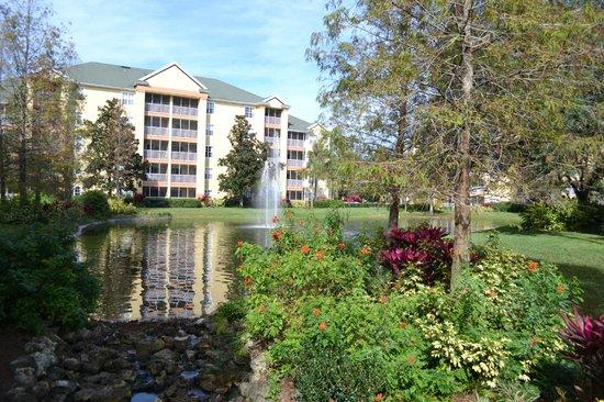 Sheraton Vistana Resort - Lake Buena Vista:                   Hotel grounds