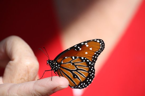 Rotary Park Environmental Center:                                     Butterfly